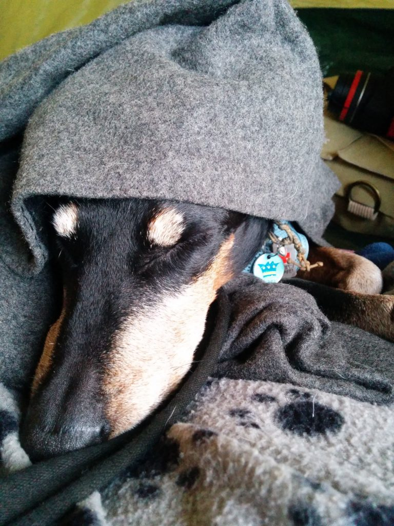 Keep warm when camping with a woolen blanket, or dog, both work!