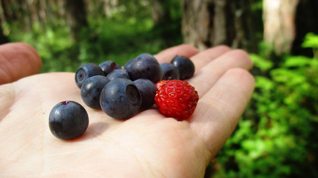 Wild berries in porridge - a camping classic!